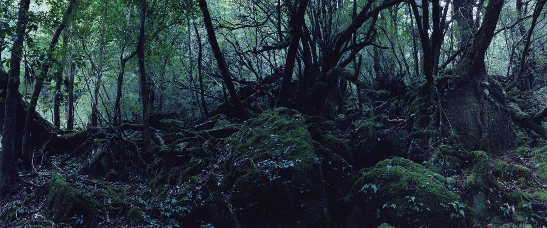Shiratani Unsuikyo Ravine #9, Yakushima, 2017,Chrystel Lebas, Wellcome Collection